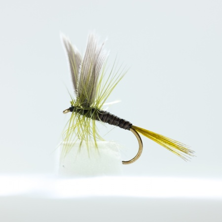 Olive Quill Dry Fly by the dozen